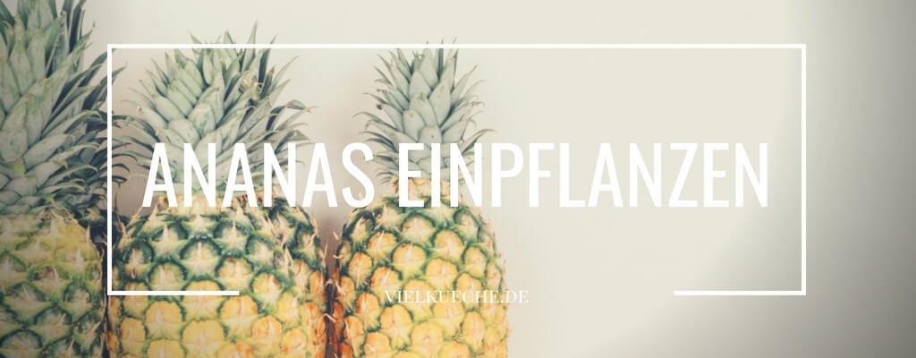 Ananas einpflanzen – fruchtige Süße aus eigenem Anbau