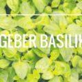 Tipps zum Anpflanzen von Basilikum