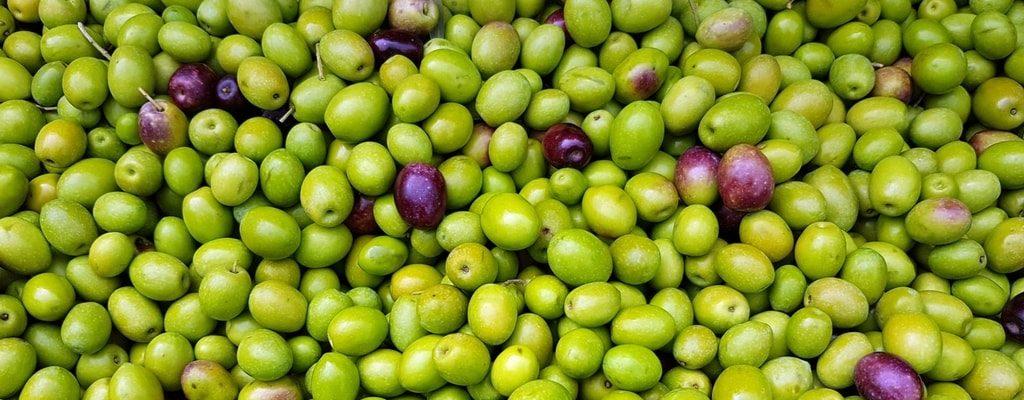 Olivenbrot – mediteraner Flair für den Gaumen