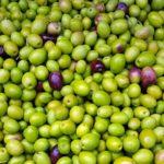 Brotbackautomat Rezept Olivenbrot